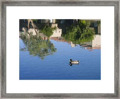 Floating In Reflections Framed Print by Susan Stone