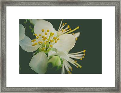 Floating In The Dark Framed Print by Marco Oliveira