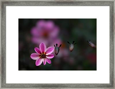 Framed Print featuring the photograph Floating by Jacqui Boonstra