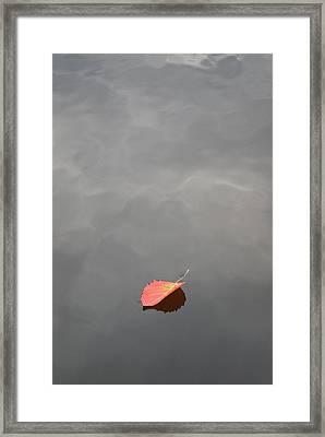 Floating Jewel Framed Print by Jake Barbour