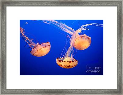 Floating Lanterns Framed Print