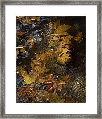 Framed Print featuring the photograph Floating Leaves - Fall In Rome by Michael Flood