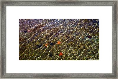 Floating Leaves Framed Print by Michael Sposato