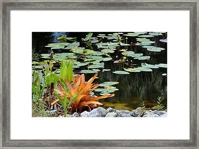 Floating Lily Pond Framed Print