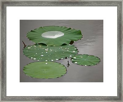 Floating Lotus Leaves Framed Print