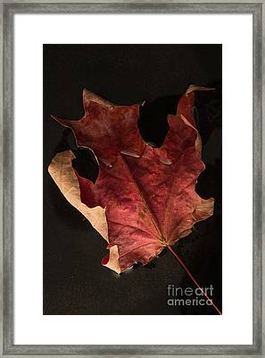 Floating Maple Leaf Framed Print