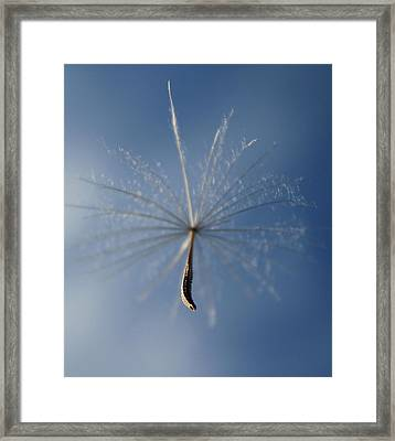 Floating On A Breeze Framed Print