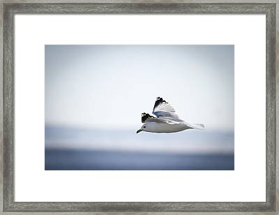 Floating On High 1 Framed Print by Thomas Young