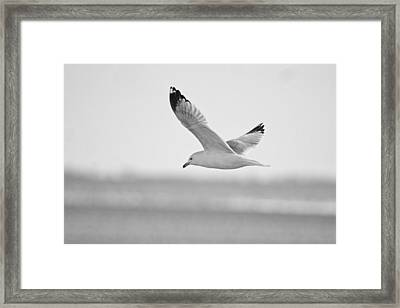 Floating On High 2 Framed Print by Thomas Young