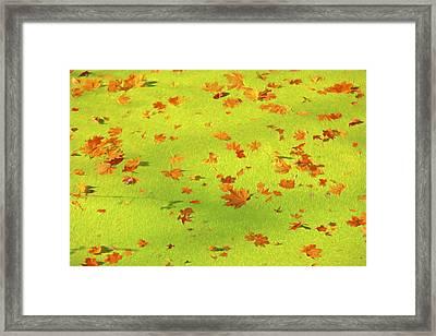 Floating Orange Leaves  Framed Print by David Letts