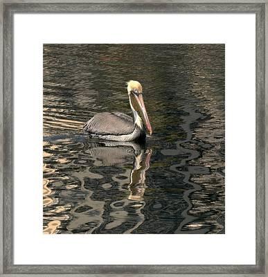 Floating Pelican Framed Print