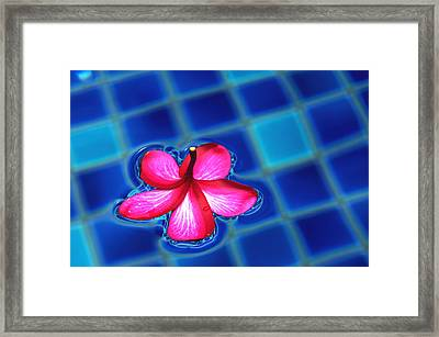 Floating Petal Framed Print