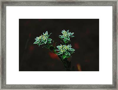 Framed Print featuring the photograph Floating Petals by John Johnson