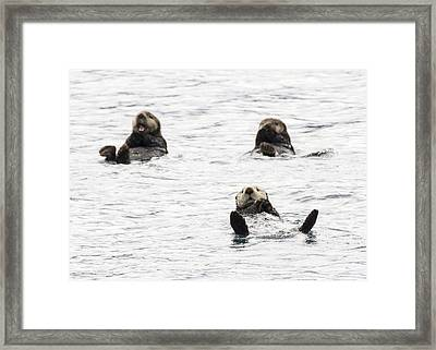 Floating Sea Otters Framed Print by Saya Studios