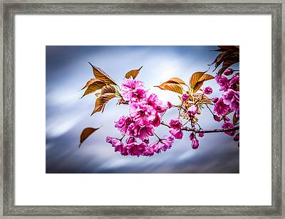 Floating To Earth Framed Print