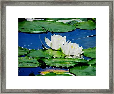 Floating Framed Print by Will Boutin Photos
