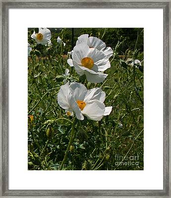 Floating With The Wind Framed Print