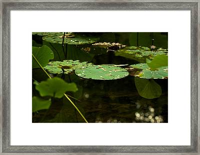 Framed Print featuring the photograph Floating World 1 - Lily Pads  by Jane Eleanor Nicholas