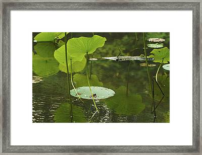 Framed Print featuring the photograph Floating World #2 - Lotus Leaves Art Print by Jane Eleanor Nicholas