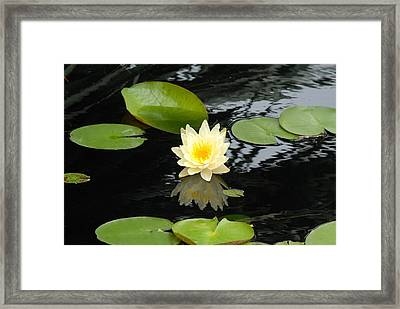 Floating Yellow Water Lily Framed Print