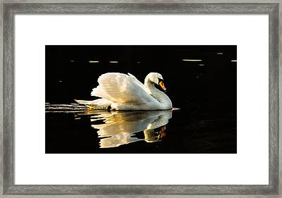 Floats On Peaceful Water Framed Print by Rose-Maries Pictures