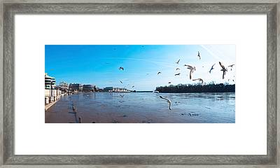 Flock Of Birds Flying At Old Georgetown Framed Print by Panoramic Images