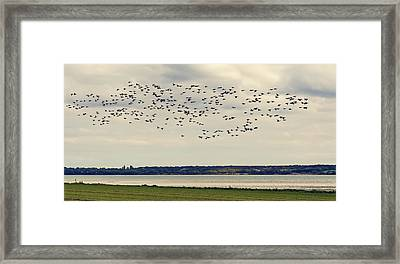 Flock Of Birds Framed Print by Svetlana Sewell