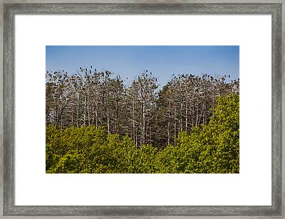Flock Of Cormorant Birds Perching Framed Print by Panoramic Images