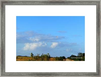 Flock Of Egrets Framed Print by Andres LaBrada