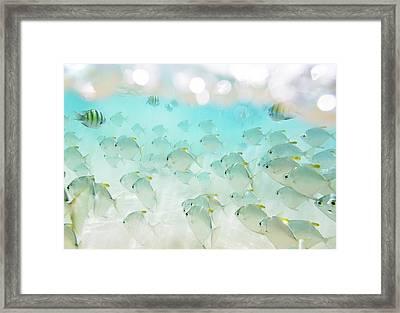 Flock Of Fish Framed Print by Danilovi