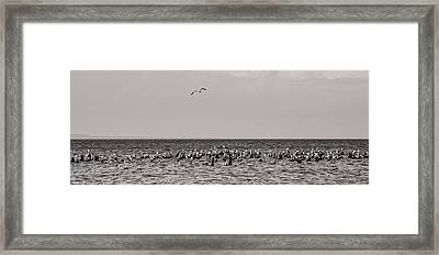Flock Of Seagulls In Black And White Framed Print by Sebastian Musial