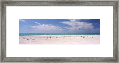 Flock Of Seagulls On The Beach, Lido Framed Print