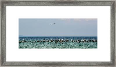 Flock Of Seagulls Framed Print by Sebastian Musial