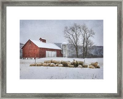 Flock Of Sheep Framed Print by Lori Deiter
