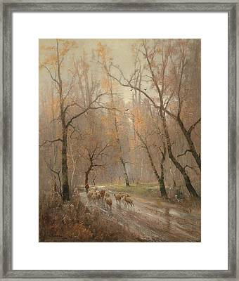 Flock Of Sheep On The Way Home Framed Print by Celestial Images