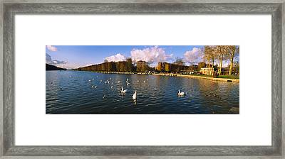 Flock Of Swans Swimming In A Lake Framed Print