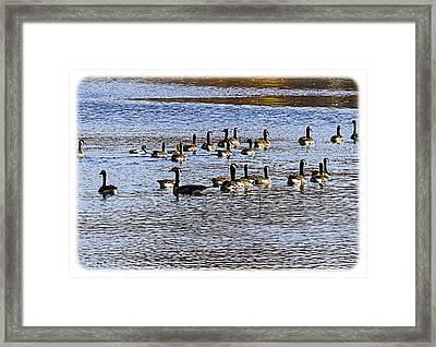 Flock On The Lake Framed Print