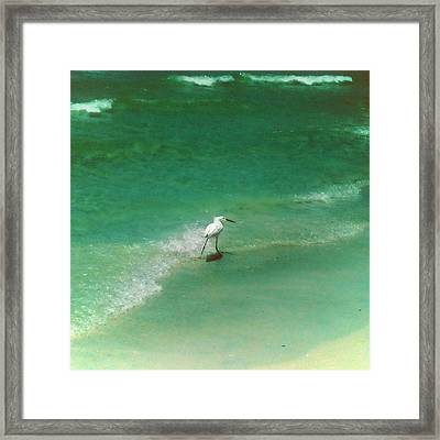 Flock Without A Seagull Framed Print by Aaron Simmons