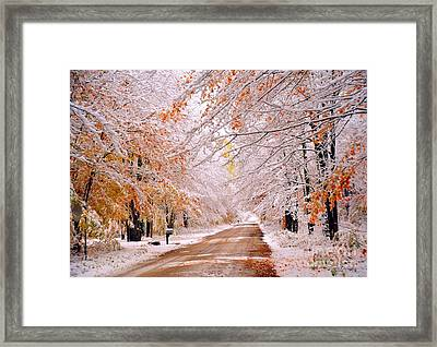 Flocked Autumn Framed Print by Terri Gostola