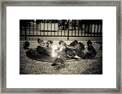 Flockin' Around The Fire Framed Print by Melinda Ledsome