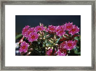 Flocks Flowers Framed Print by Retro Images Archive