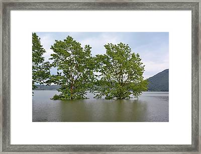 Flooded Black Polar Trees Framed Print by Bruno Petriglia