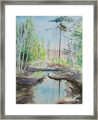 Flooded Forest Framed Print by Martin Howard