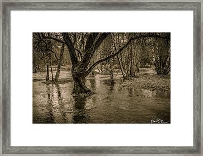 Flooded Tree Framed Print