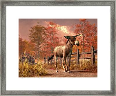 Flop Eared Donkey Framed Print by Daniel Eskridge