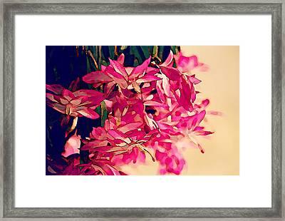 Flor De Maio Framed Print by Jean Connor