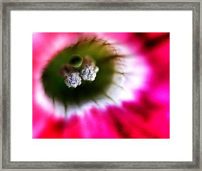 Flora Cave Framed Print by Peter Feo