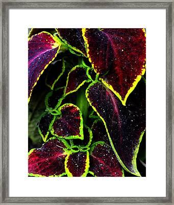 Flora Psychadelica Framed Print