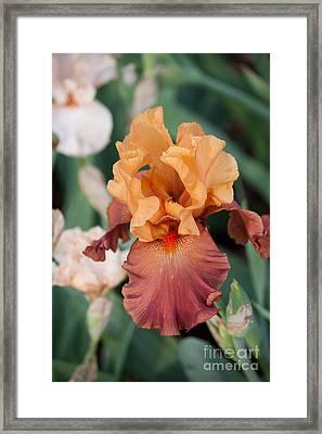 Floral 12 Framed Print