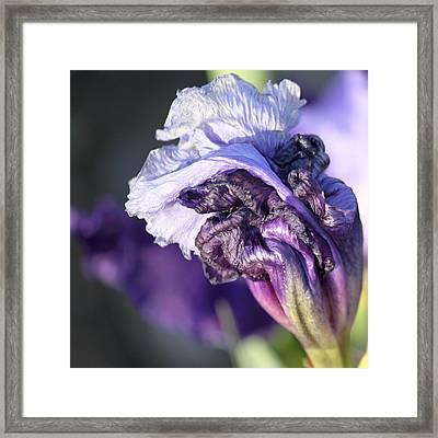 Floral 19 Framed Print